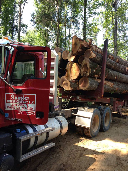 Sumter Timber and Alabama Forestry